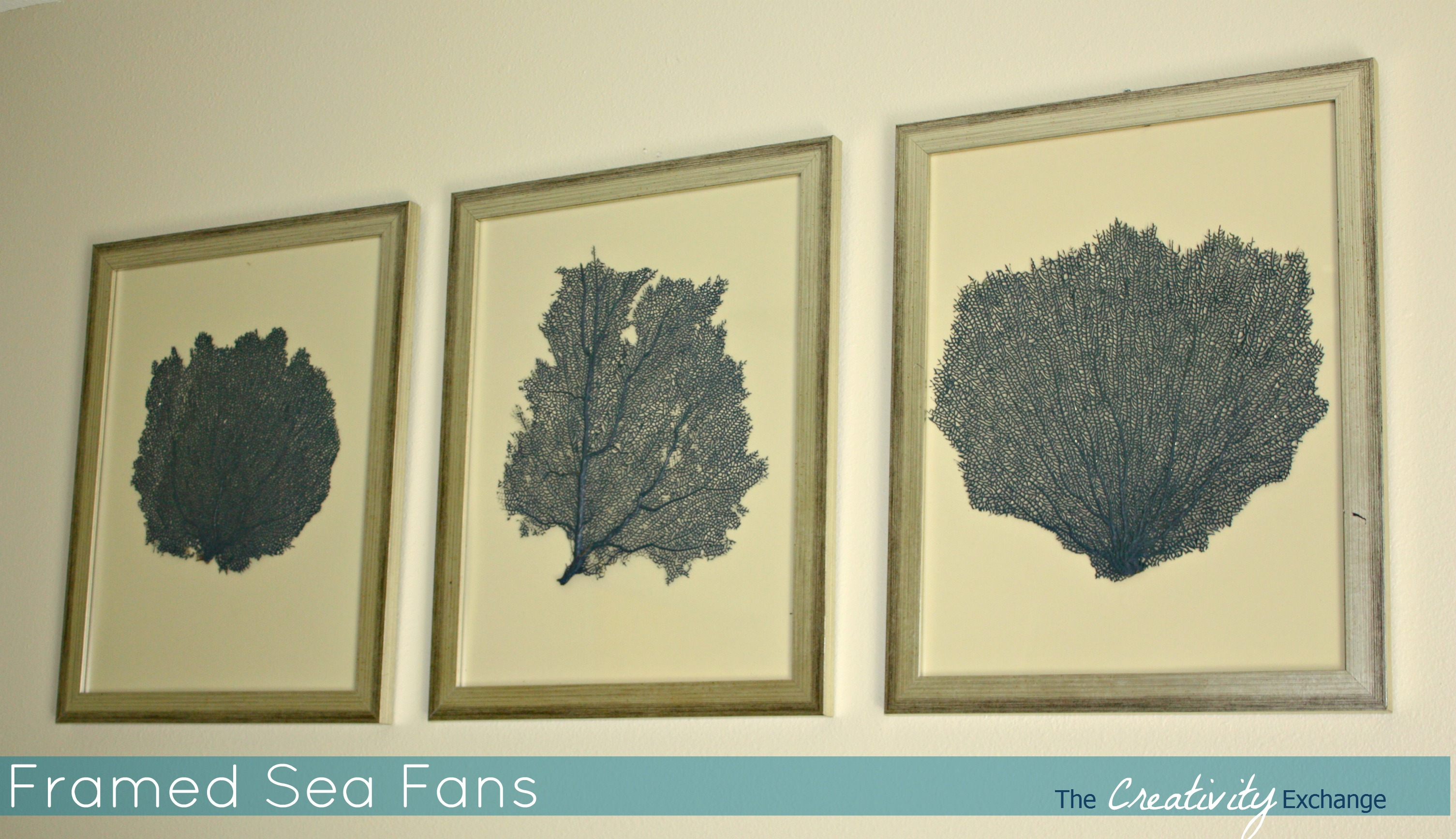Painted and Framed Sea Fan Collections…