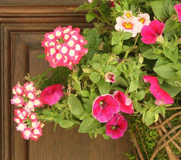 flowers, pink flowers
