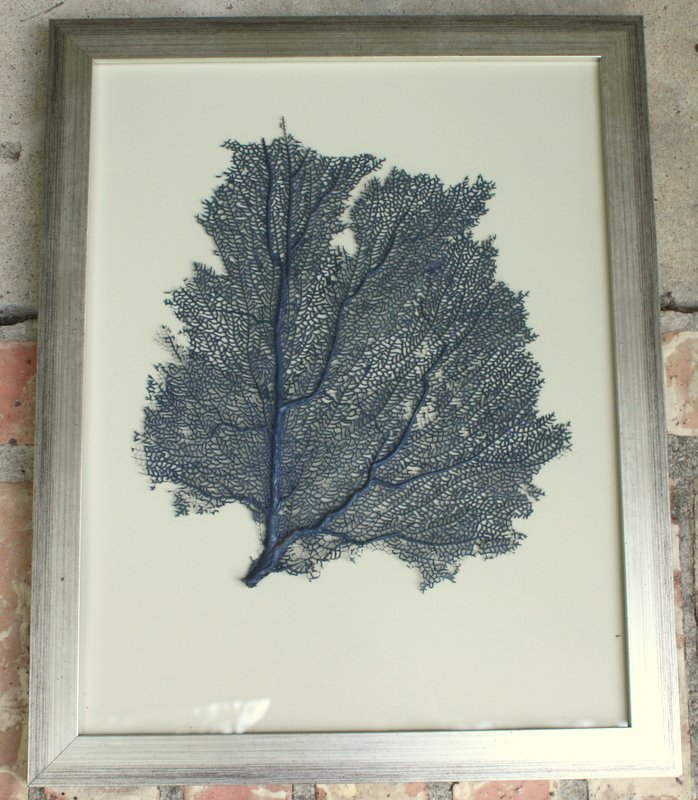 Painted and framed sea fan collections for Where can i buy framed art