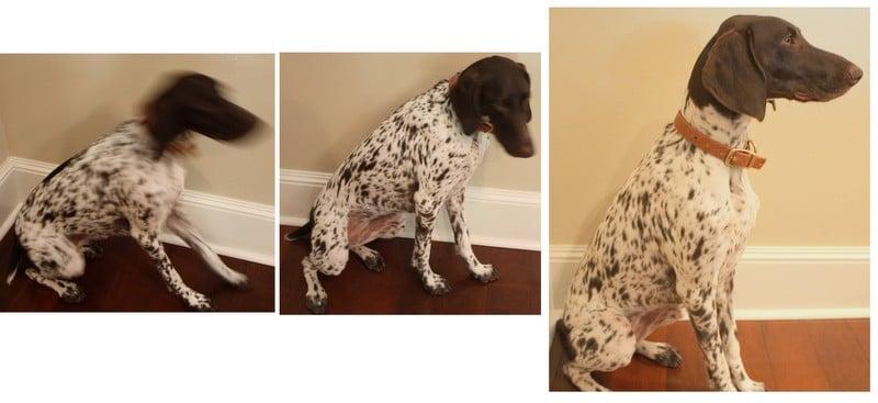 Dog-Dog Silhouette- Dog Silhouette Art