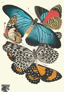 new york public library butterflies
