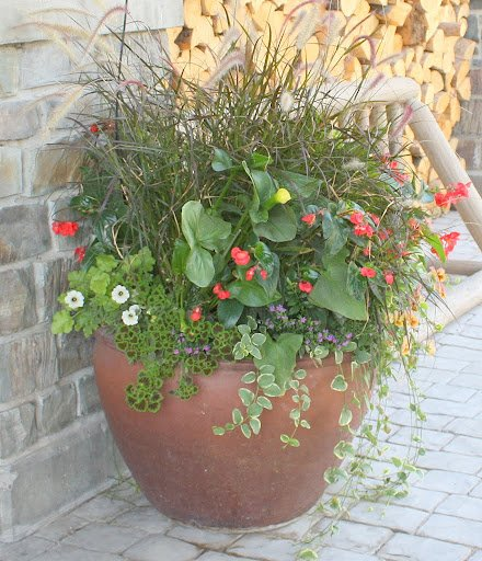Teton Mountain Lodge and Spa- Gardening- Plants- Fall Plants