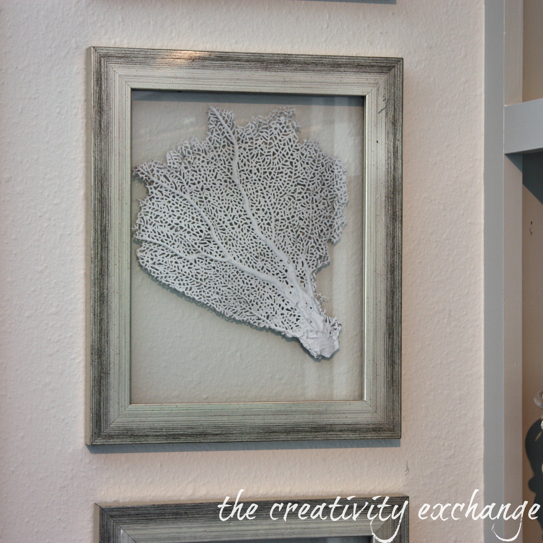 diy double sided glass frames for framing shells and sea fans the creativity exchange - Double Glass Frame