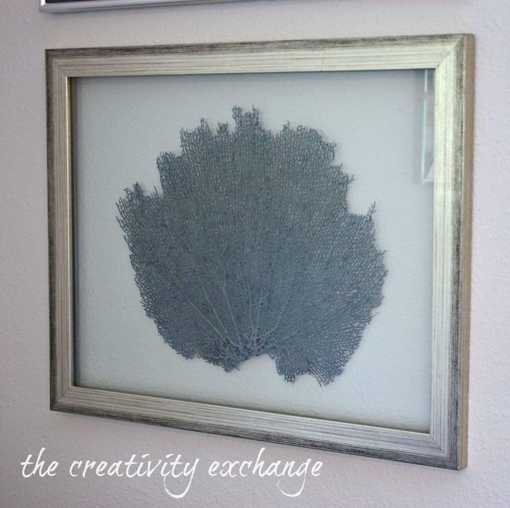 Diy Double Sided Glass Frames For Framing Shells Or Dyed Sea Fans