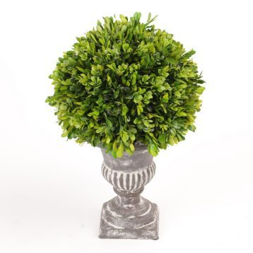 17 Inch Boxwood Topiaries from Kirkland's
