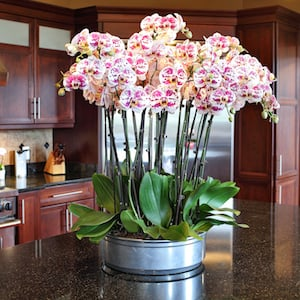 Orchids in low metal planter.
