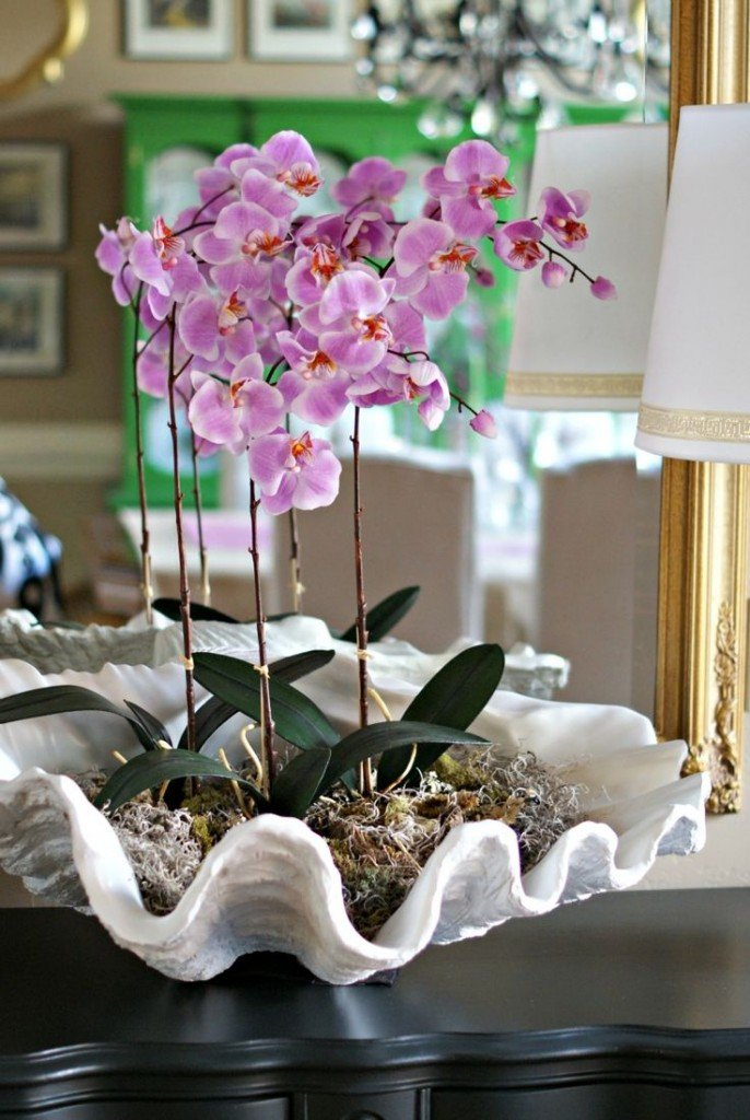 Orchids potted in clam shell.