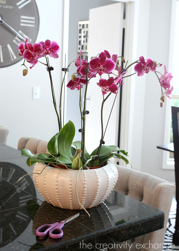 Tips and tricks for planting and growing orchids.