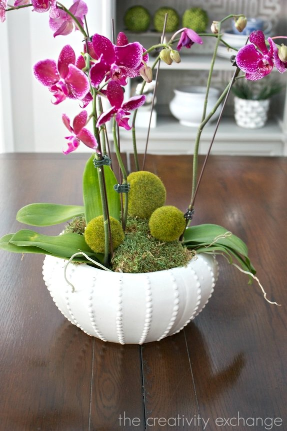 Tips and tricks for planting, growing and decorating with orchids.