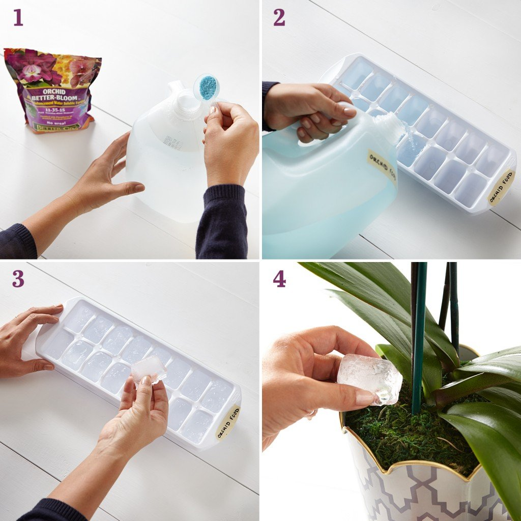 Trick for caring and growing orchids.
