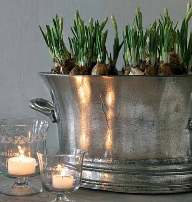 Create ways to decorate and use champagne buckets..