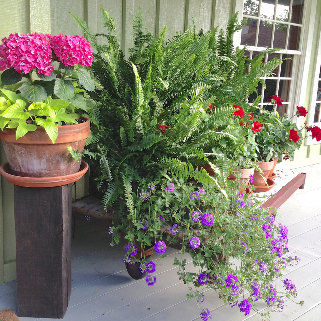 Creative garden container pot combinations and tips for Planting schemes for small gardens
