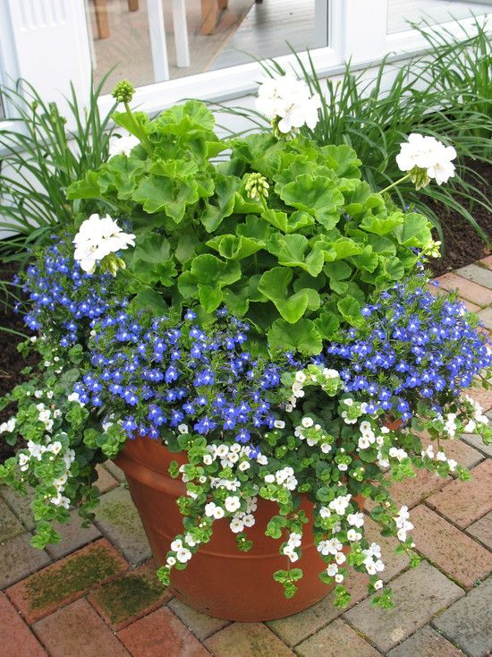 Creative garden container pot combinations and tips for Planting flowers in pots ideas