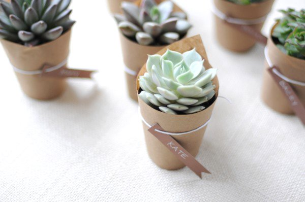 Craft Paper Wrapped Succulents
