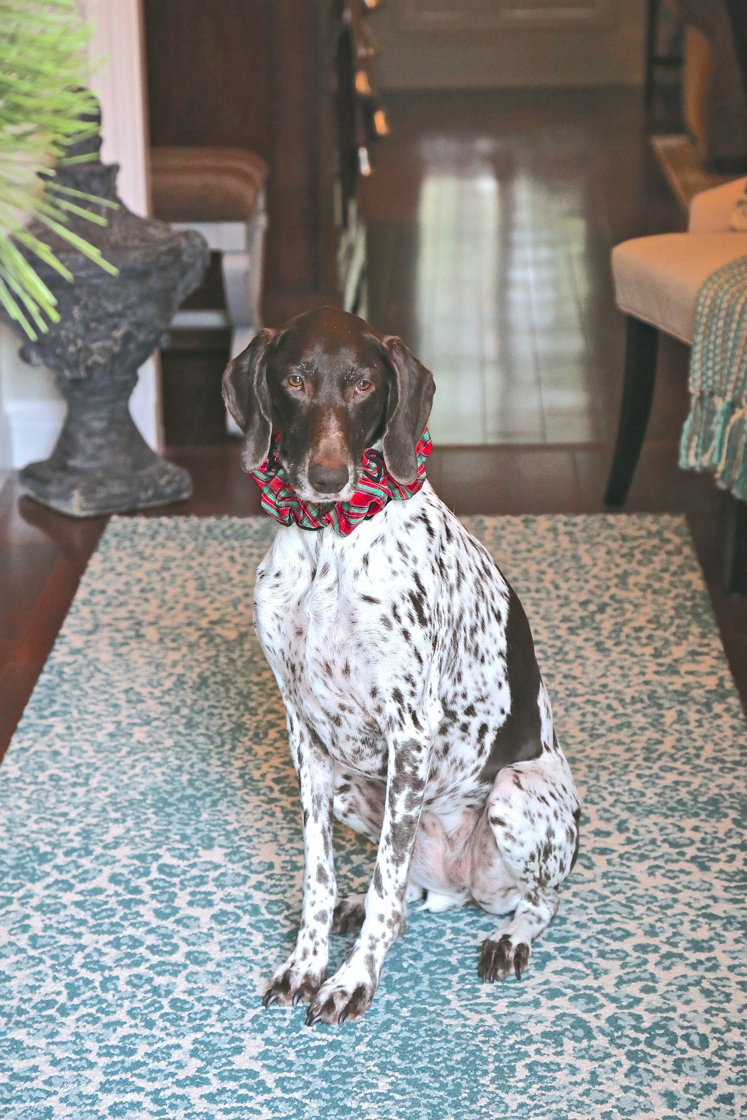 The Creativity Exchange Christmas Home Tour. Ava the German Shorthair