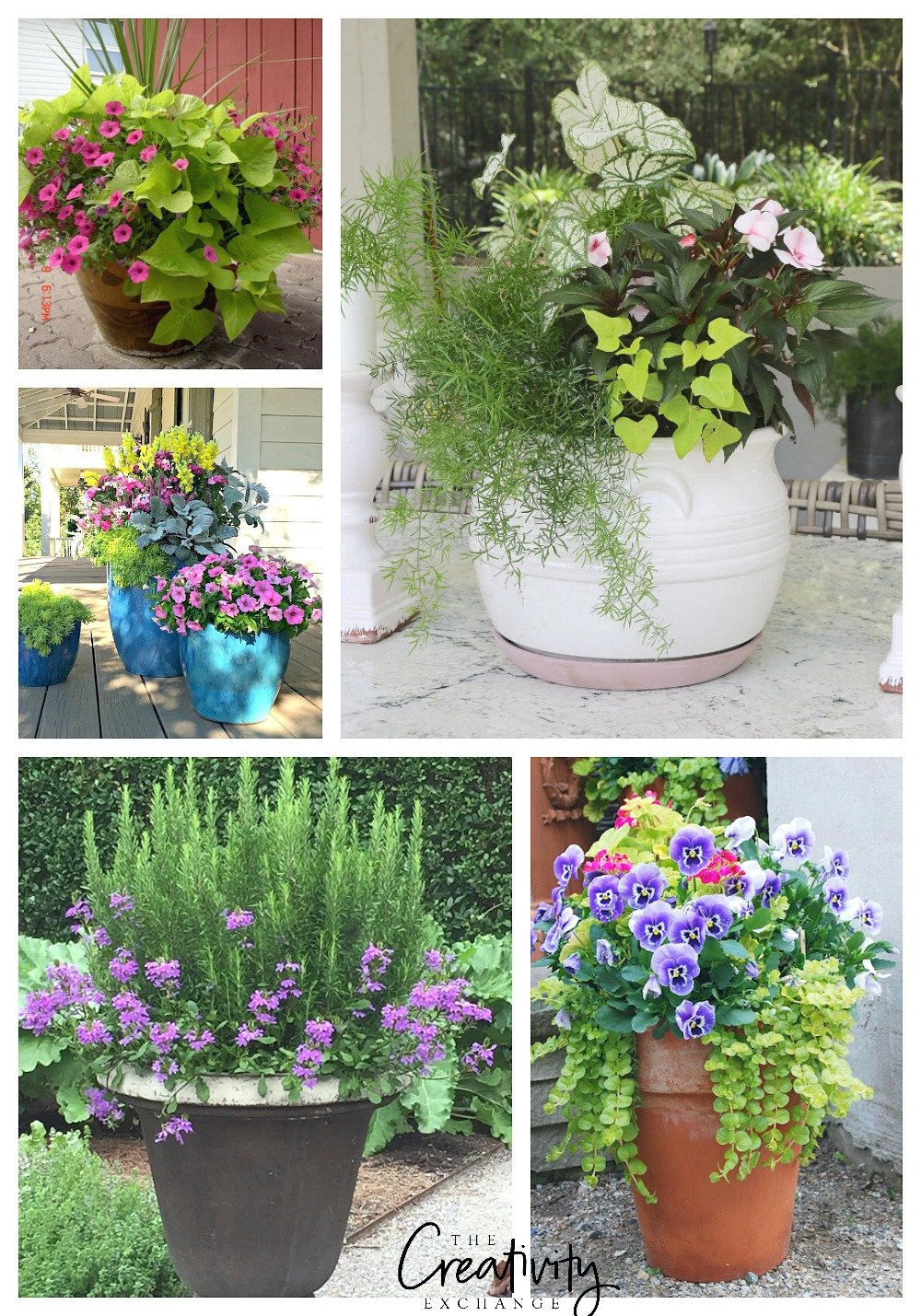 Creative garden container pot plant combinations