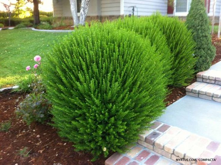 Creative landscape ideas with big impact for Large bushes for landscaping