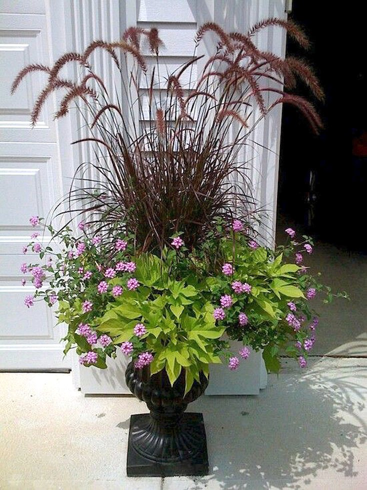 Fountain Grass, Sweet Potato Vine, Lantana