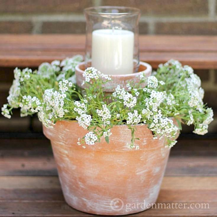 Sweet Alyssum Candle Centerpiece