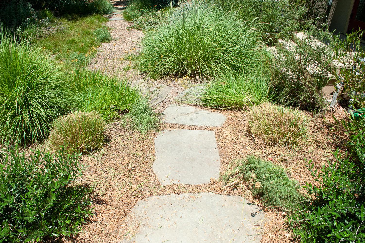 Ornamental grasses trimmed