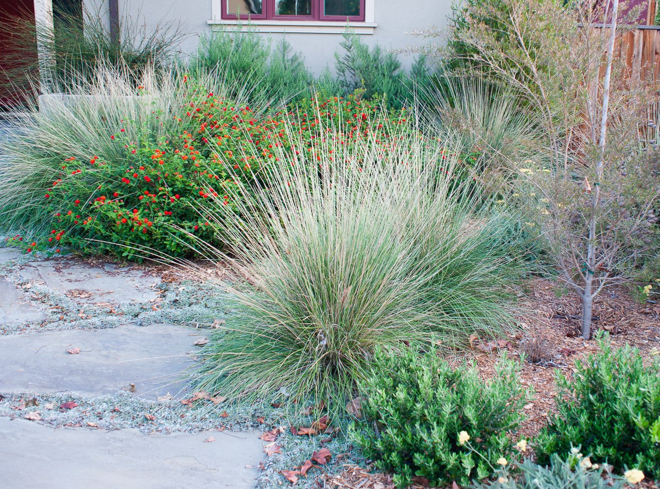 Ornamental grasses added structure