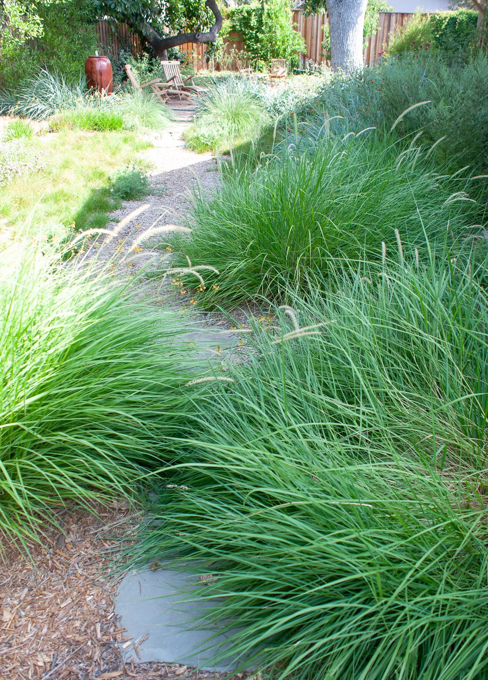 Ornamental grasses need to be maintained