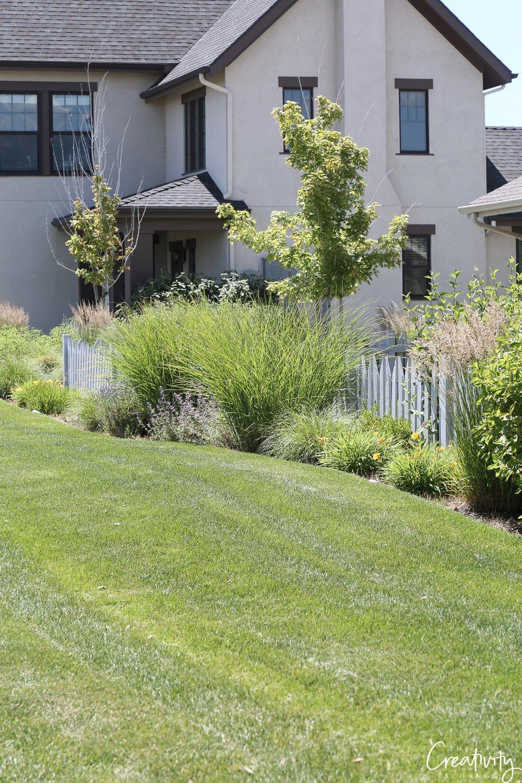 Ornamental grass for lawn border