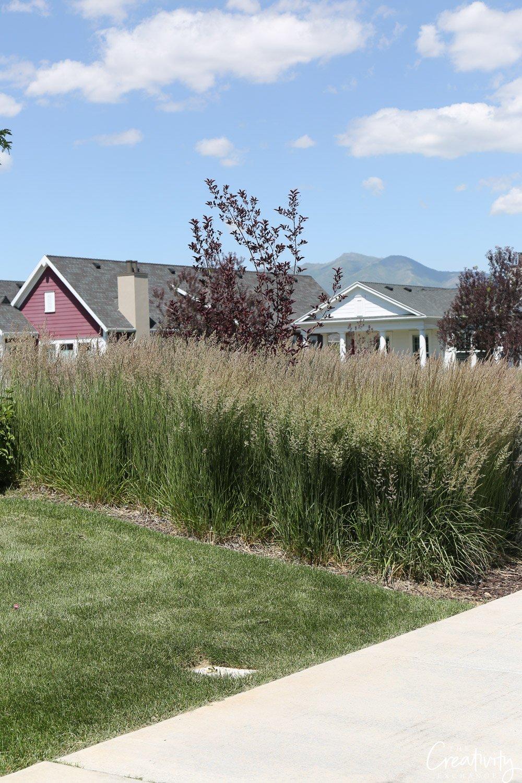Border of grass