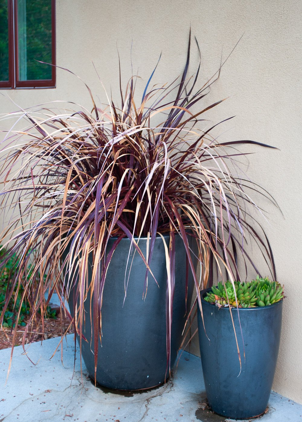 Ornamental Grasses The Every Garden Plant The Creativity Exchange