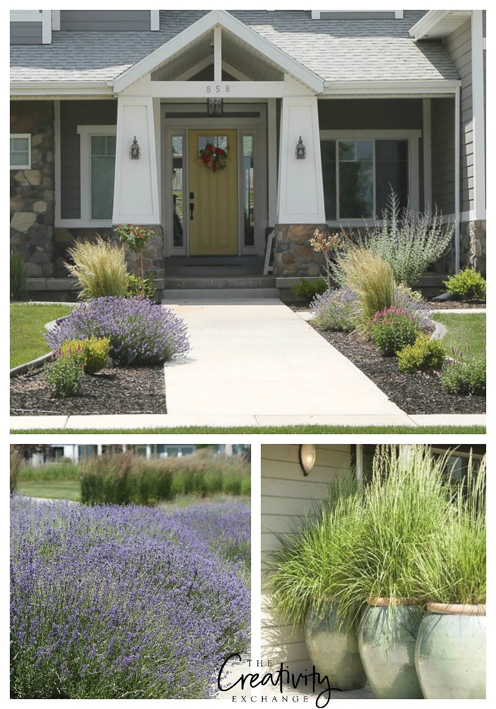 Tips for planting ornamental grasses