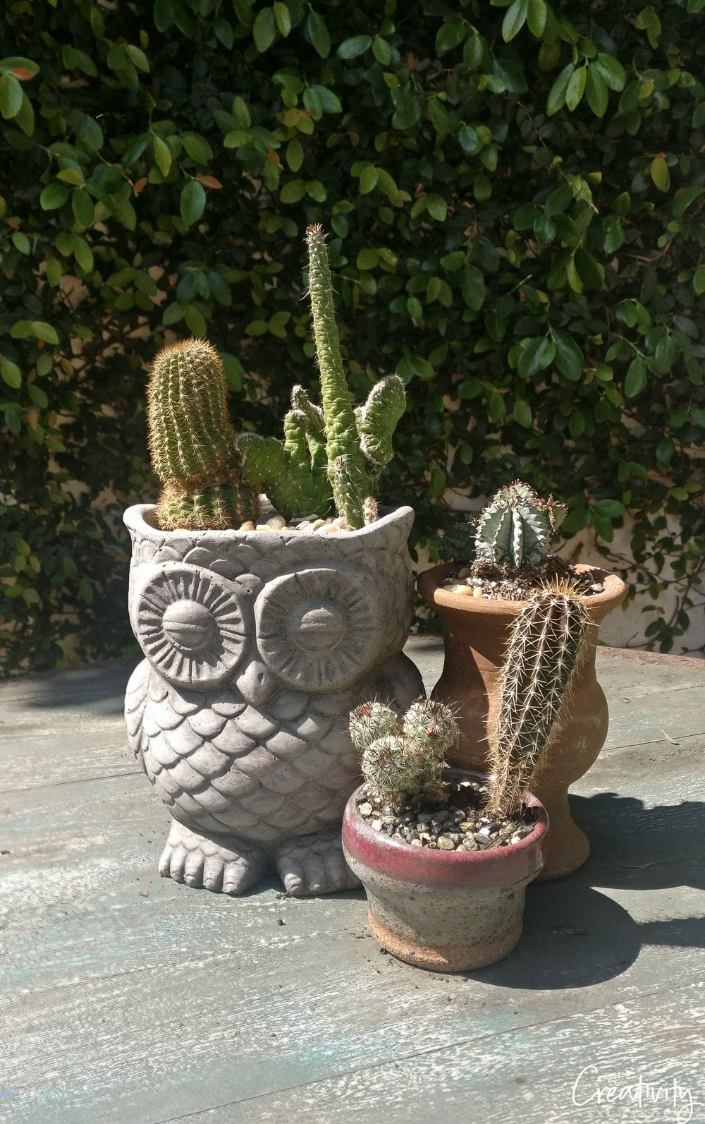 Cute plant containers